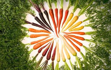 Carrots: Orange Is Not the Only Colour