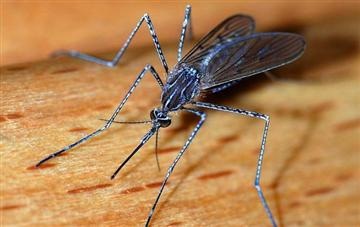 Do mosquitoes bite you more if you eat sweet foods and how can I deter them?