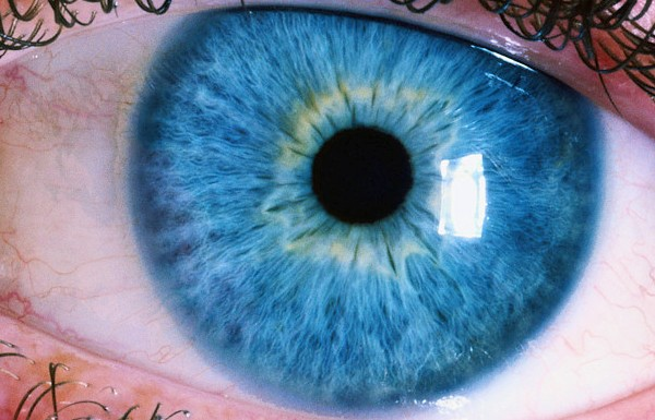 iridology works on the theory that the eye particularly