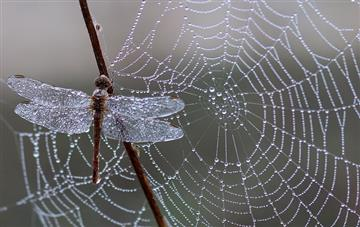 Spider web silk could make artificial tendons or regenerate ligaments