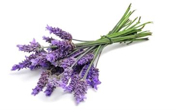 Lavender essential oil inhalation helps post-menopausal women fall asleep and stay asleep